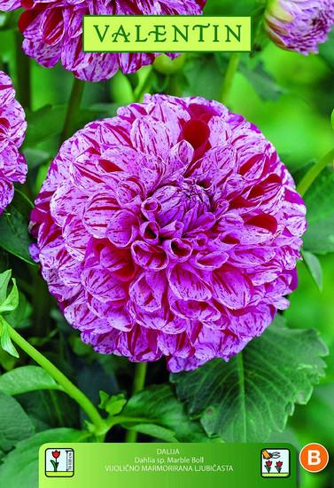 DALIJA BALL MARBLE BALL z vijoličnimi cvetovi VALENTIN 1kos/zav