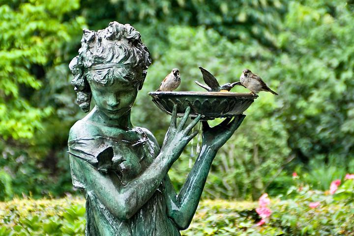 Ptice v vrtu poleti
