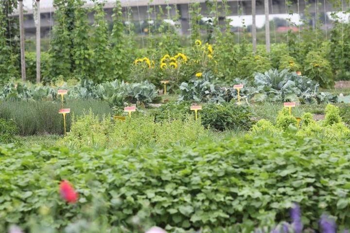 Načrt za vrt