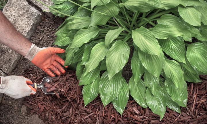 Zaščitimo tla s prekrivko