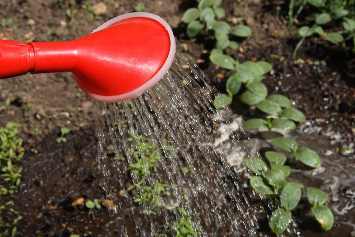 Voda v vrtu