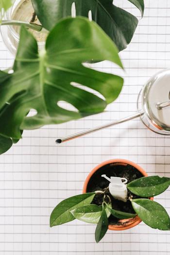 PAMETNI OPOMNIK ZA ZALIVANJE RASTLIN PLANTRAY