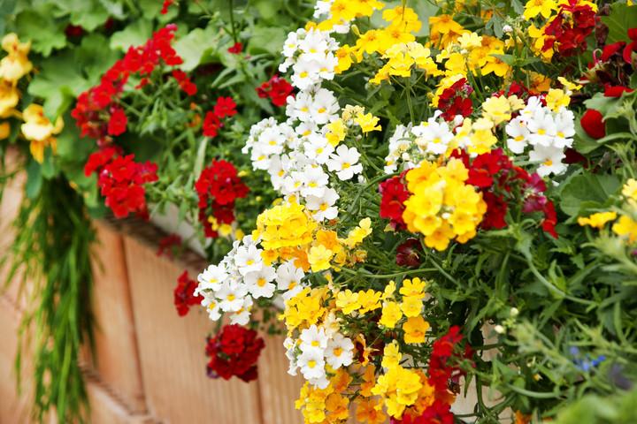 Nasvet za sajenje balkonskih rastlin