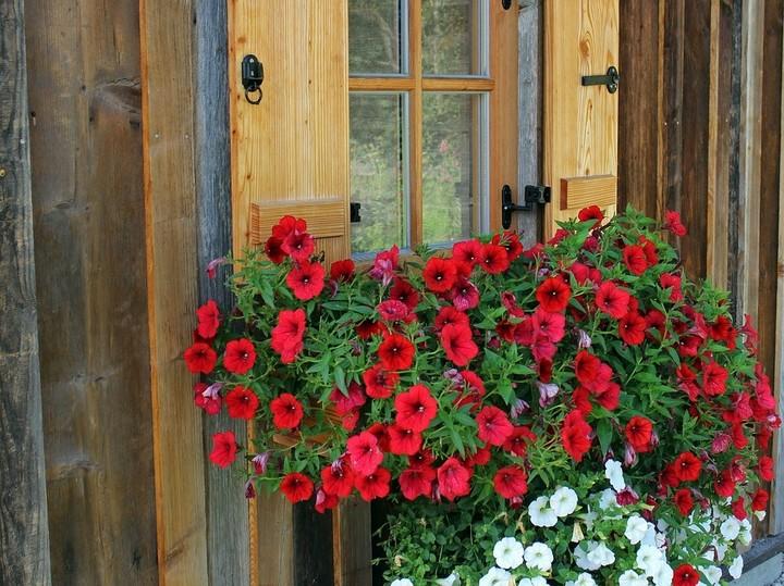 Sajenje balkonskih rastlin