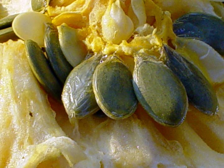 Bolezni in škodljivci oljnih buč