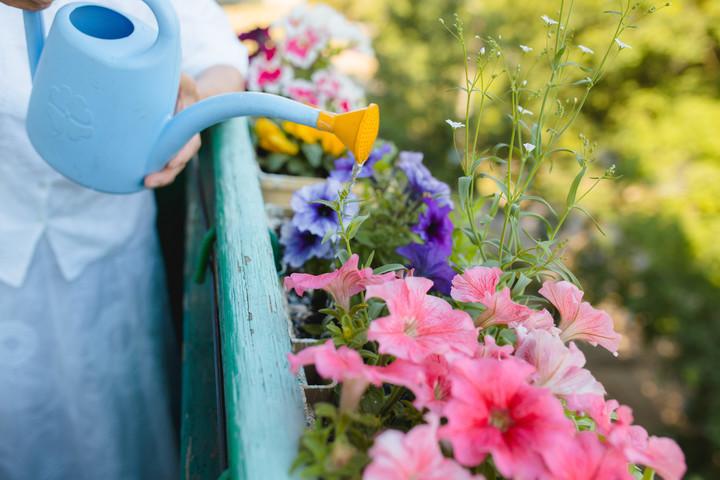 Ideje in izbira balkonskega cvetja