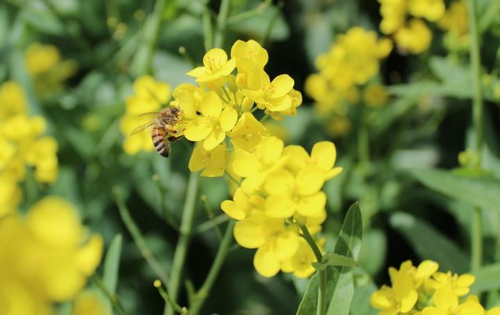 Kako v 3 korakih osvojiti zeleno gnojenje?