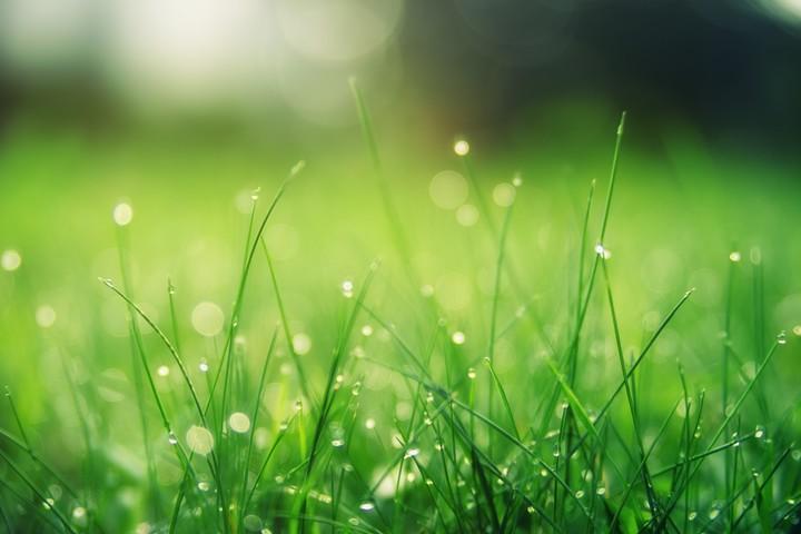 Kako do negovane in zelene travnate površine?